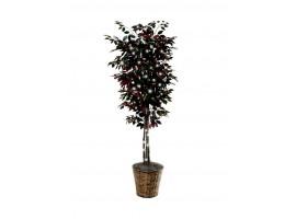 Silk Ficus Tree with Lights