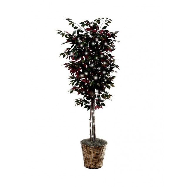 Silk Ficus Tree with Lights